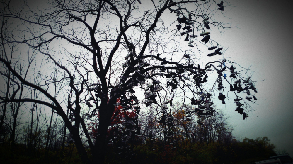 This one is a shoe-in. — Tree of Soles (GC27XEW) — Geocache of the Week