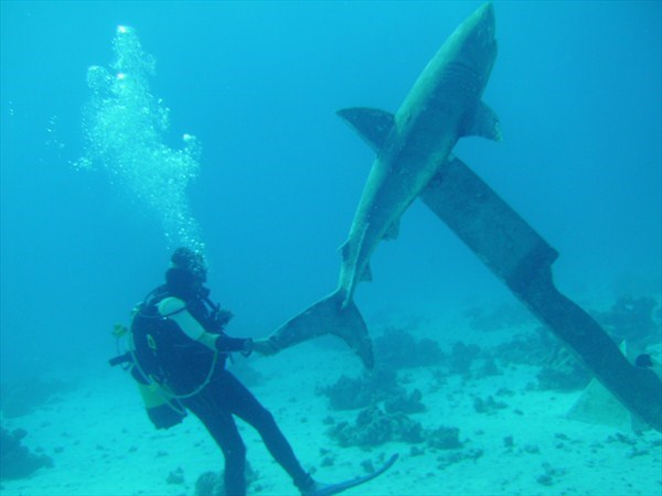 The shark was impaled by a... huge steak knife?