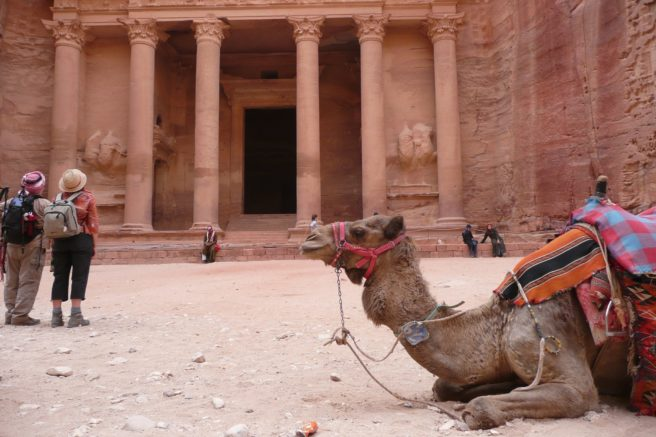 A camel takes a rest in front of Petra