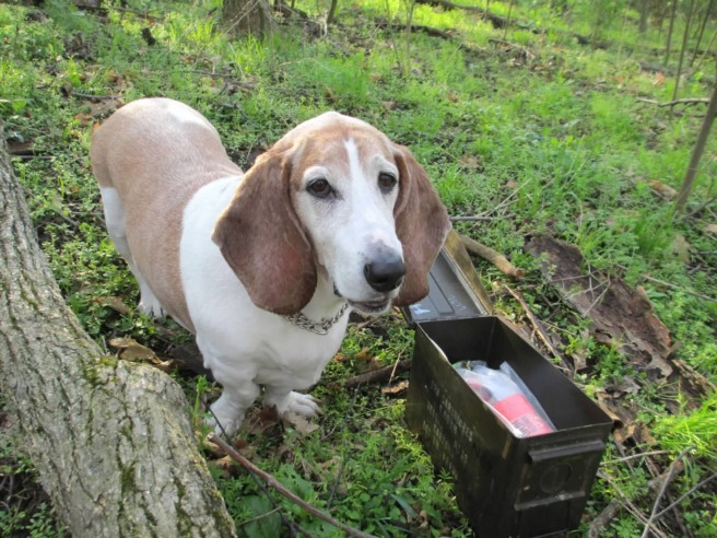Dogs of geocaching